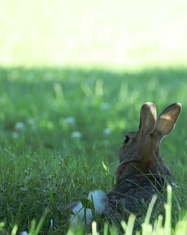 Bunny, Rabbit, Easter, Cute, Animal, Spring, Holiday