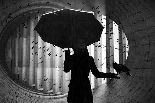 Umbrella, Bird, Woman, Man, Rain, Birds, Black White