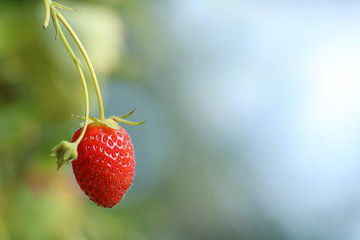 Strawberry, Fruit, Sweet, Fruits, Mature, Summer