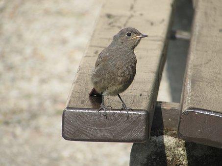 Bird, Bench, Summer, Comfort