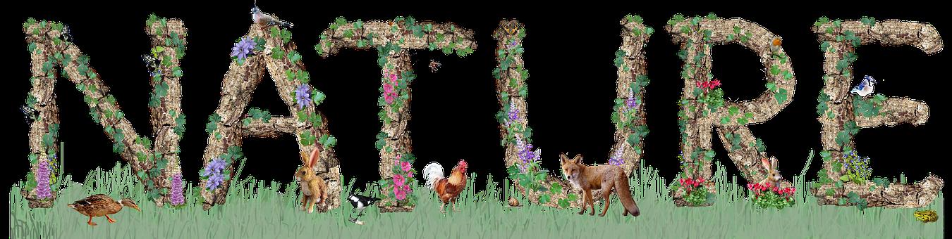 Nature, Title, Text, Logo, Theme, Lettering