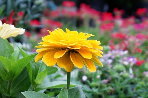 Summer Flowers, Yellow, Spring, Nature, Garden, Floral