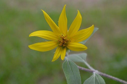 Flowers, Sunflower, Yellow Flowers, Bright, Yellow