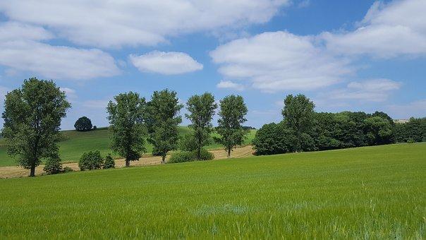 Landscape, Tree, Field, Meadow, Agriculture, Farm
