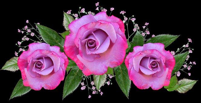Flowers, Roses, Arrangement, Floral Decoration
