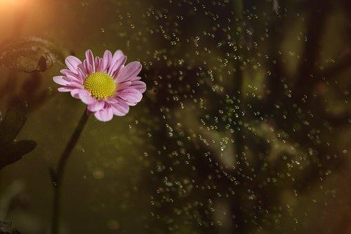 Flower, Pink, Pink Flower, Blossom, Bloom, Nature