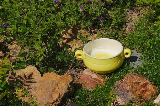 Nature, Porridge, Food, Plate, Nutrition, Breakfast