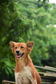 Dog, Portrait, Dog Portrait, Doggy, Breed, Summer