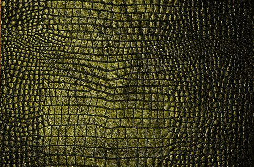 Texture, Cook, Green, Skin, écail, Chipped Off, Reptile