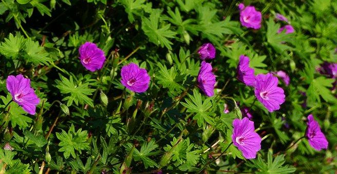 Nature, Garden, Flowers, Sun, Light