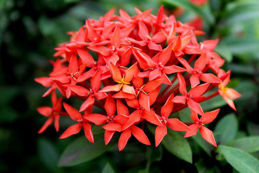Flower, Red, Nature, Bloom, Botany, Gardening