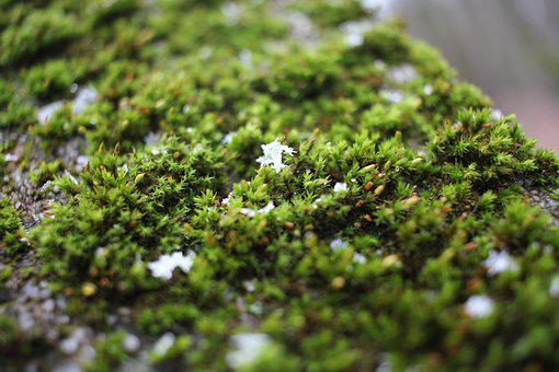 Moss, Green, Winter, Snow, Crystal, Nature, Trist