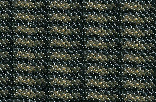 Texture, Carapace, Reptile, Tortie, Green