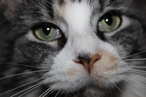 Cat, Hypnotic, Eyes, Cat's Eyes, Portrait