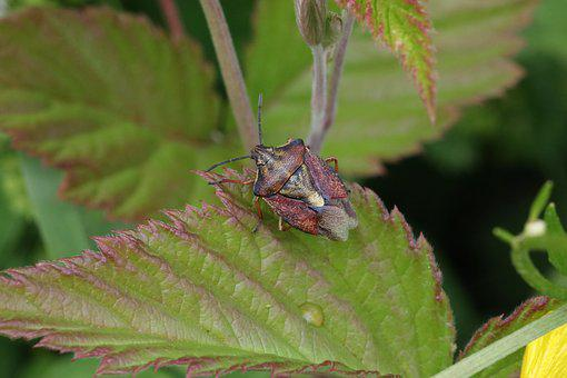Bug, Grass, Sitting, Insect