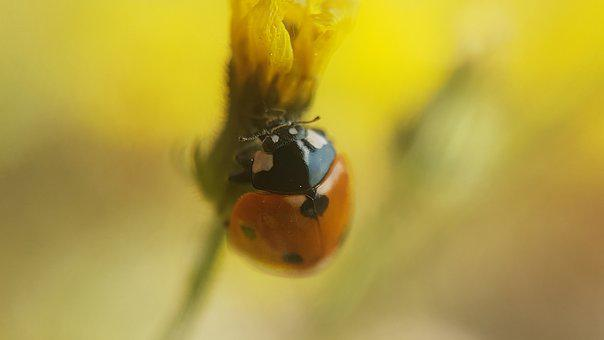 Ladybug, Beetle, Nature, Blur, Insect, Lucky Charm, Red