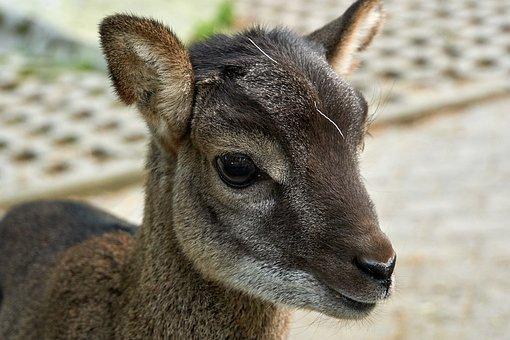Kid, Animal, Cute, Domestic Goat, Nature, Zoo, Farm