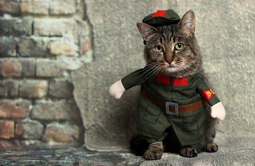 Cat, Animal, Costume, Cute, Pet, Domestic, Kitten