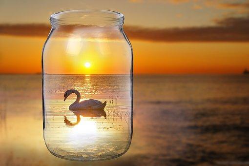 Swan, Bird, Sunset Bank, Sea, Lake, Swans, Grace