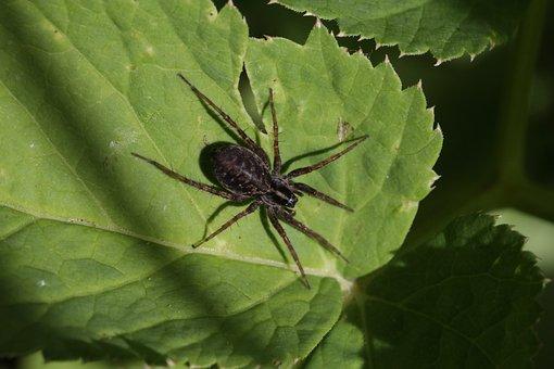 Spider, Sitting, Sheet, Little, Black, Summer