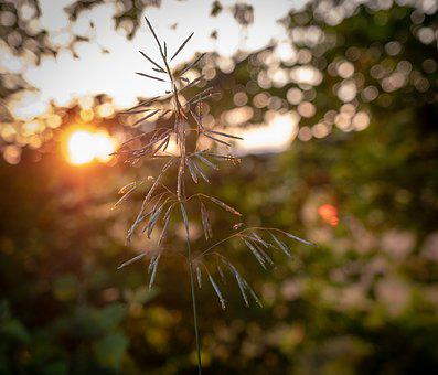 Grass, Blade Of Grass, Leaves, Sunset, Macro, Closeup