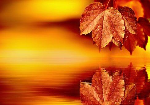 Leaf, Mirroring, Water, Background, Blank, Leaves, Tree