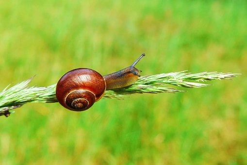 Snail, Molluscs, Spike Grass, Animals, Invertebrates