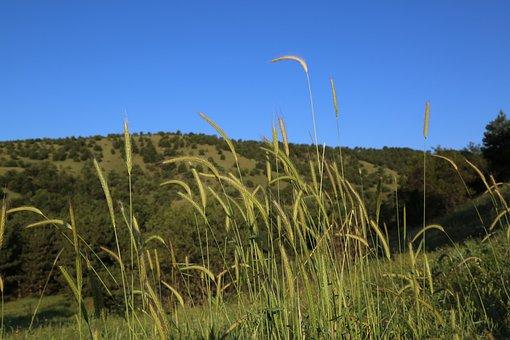 Land, Mountain, Landscape, Plant, Flower, Spring