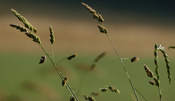 Nature, Landscape, Grasses, Meadow, Sun, Light
