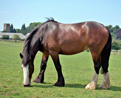 Horse, Field, Grass, Sky, Blue, Nottingham
