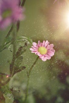 Flower, Pink, Blossom, Bloom, Pink Flower, Nature