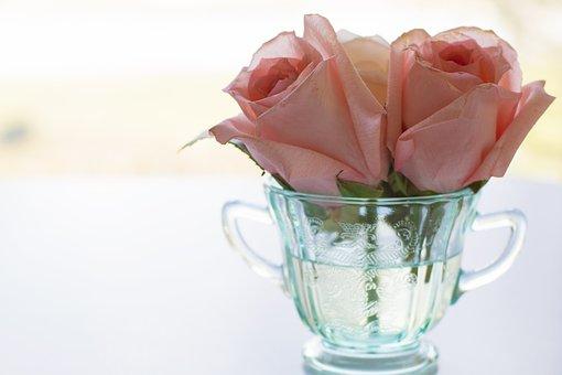 Rose, Pink Roses, Tea Cup, Vintage, Bloom, Background