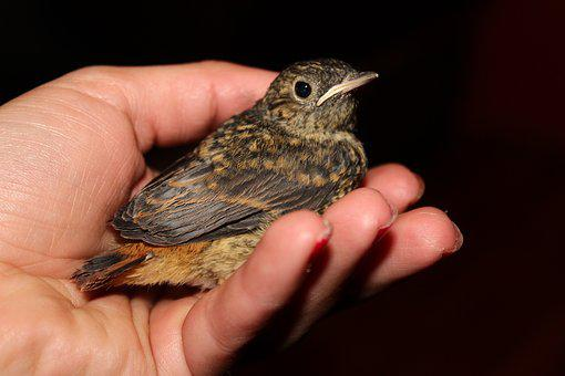 Dictionary, Bird, Sick Bird, Nightingales