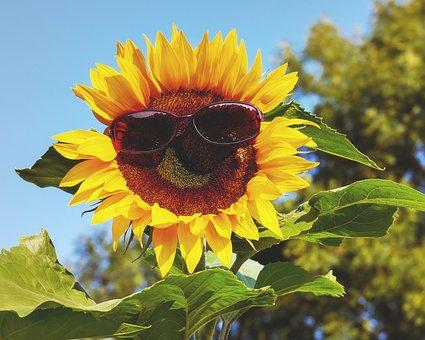 Glasses, Sunglasses, Sun, Sun Flower, Eye Protection