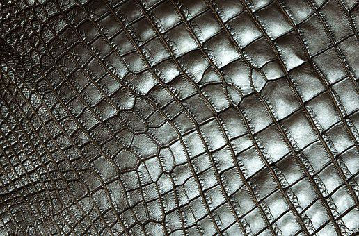 Texture, Carapace, Reptile, Tortie