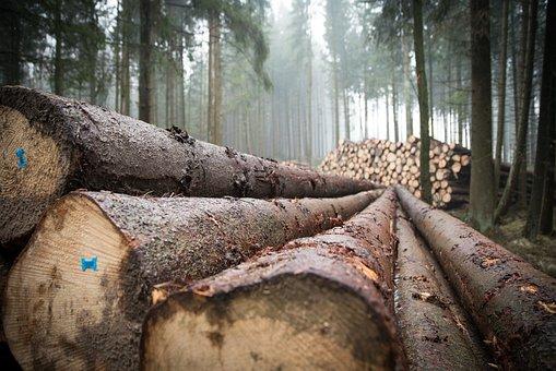 Wood, Forest, Log, Tree Trunks, Tree, Storm Wood