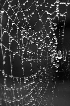 Dew, Spider Web, Dewdrops, Drops, Water