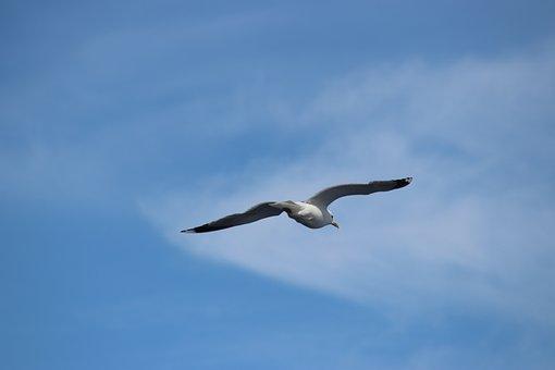 Seagull, Bird, Seevogel, Sea, Animals, Beach, Fly