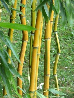 Bamboo, Leaves, Wood, Garden, Zen, Nature, Spring