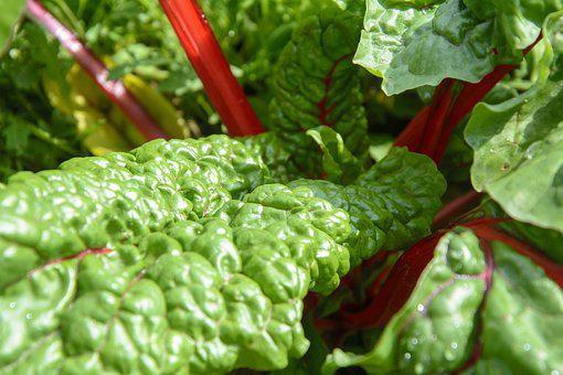 Chard, Garden, Vegetables, Healthy, Food, Vitamins, Bio