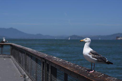 Seagull, Bird, Birds, Nature, Water, Sea, Port, Gull