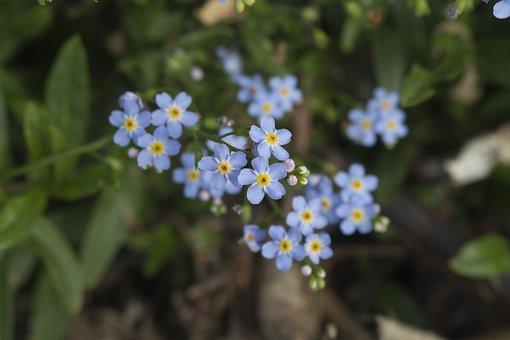 Nots, Summer, Bouquet, Blue, The Delicacy, Flowers