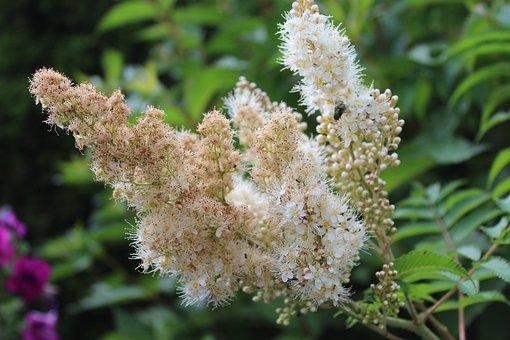 White Blossom, Flower, Bush, Wild Flowers, White, Close
