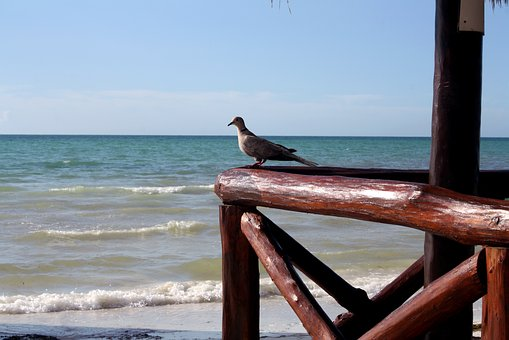 Dove Dove, Holbox Island, Quintana Roo, Mexico, Beach