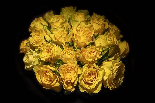 Flower, Vase, Rose, Bouquet, White, Floral, Plant