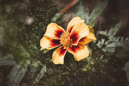 Flower, Blossom, Bloom, Yellow, Yellow Flower, Nature