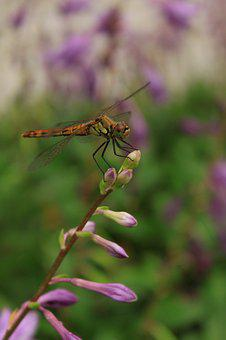 Dragonfly, Flowers, Insects, Nature, Affix