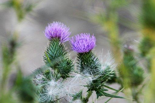 Flower Nature, Summer Flowers, Garden, Wild Flower