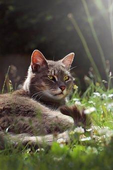 Cat, Garden, Eyes-green, Domestic Cat, Grass Cat