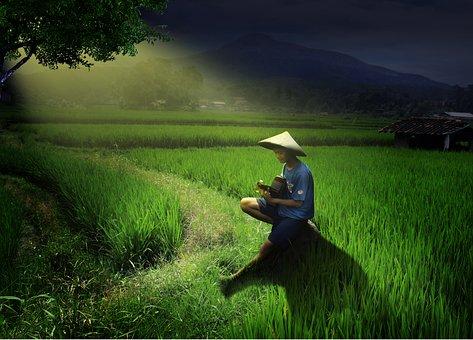 Nature, Grass, Field, Tree, Green